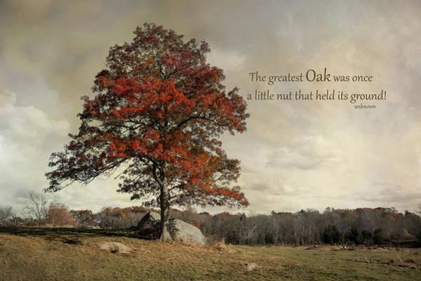 Photograph - Oak by Robin-Lee Vieira