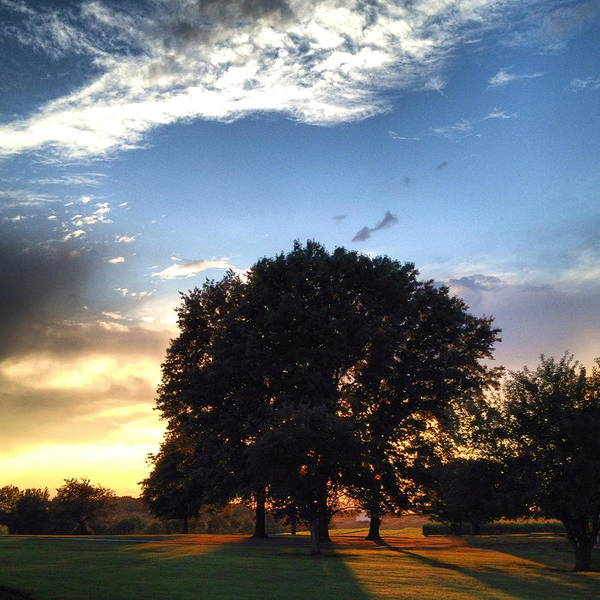 Photograph - Oak Tree At The Magic Hour by Angela Rath