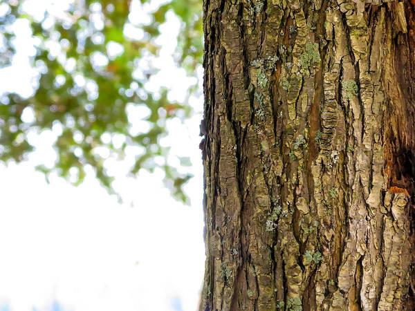 Photograph - Oak Tree At Torch Lake by Lars Lentz