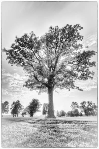 Canon Eos 6d Photograph - Oak Tree Bw by Jakub Sisak