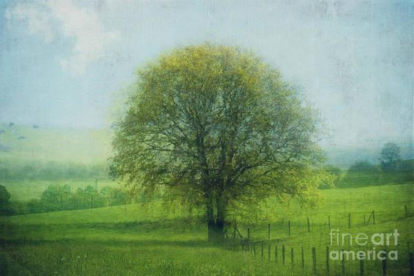 Felder Wall Art - Photograph - Oak Tree In Spring by Dirk Wuestenhagen