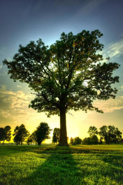 Canon Eos 6d Photograph - Oak Tree by Jakub Sisak