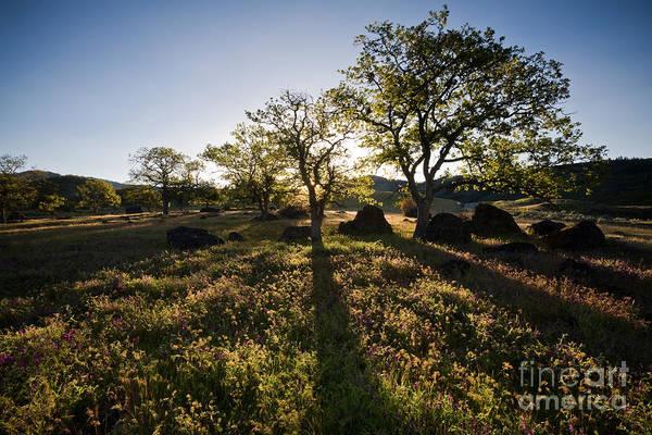 Rogue Valley Photograph - Oak Tree Shadows by Sean Bagshaw