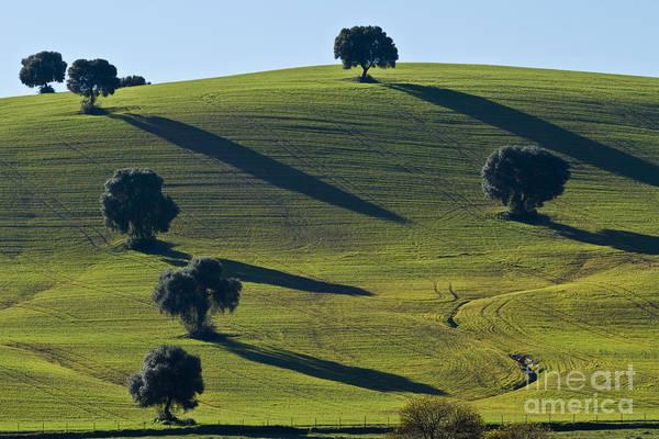 Photograph - Oak Trees On Grazingland by Heiko Koehrer-Wagner