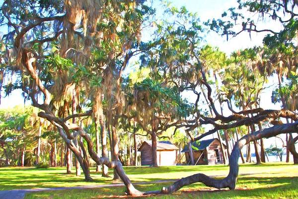 Photograph - Oaks At Princess Place by Alice Gipson