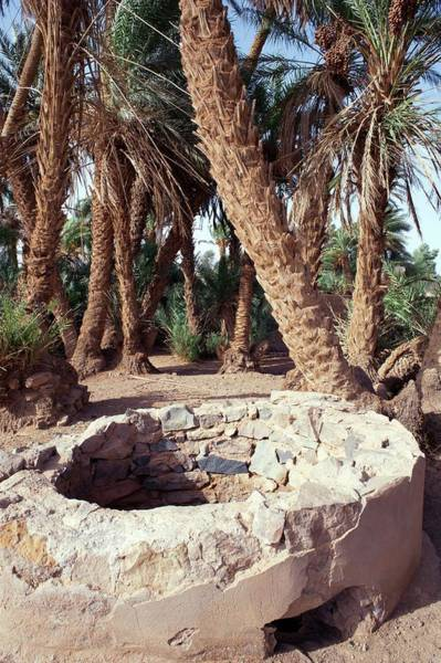 Berber Wall Art - Photograph - Oasis Well And Trees by Jon Wilson