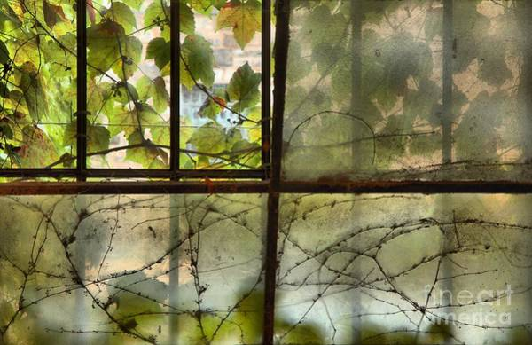 Photograph - Obscured View by Adam Jewell