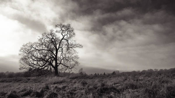 Photograph - Obsession by Carrie Cole