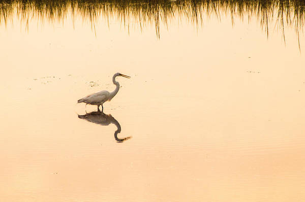 Photograph - Obx Egret by Don Johnson