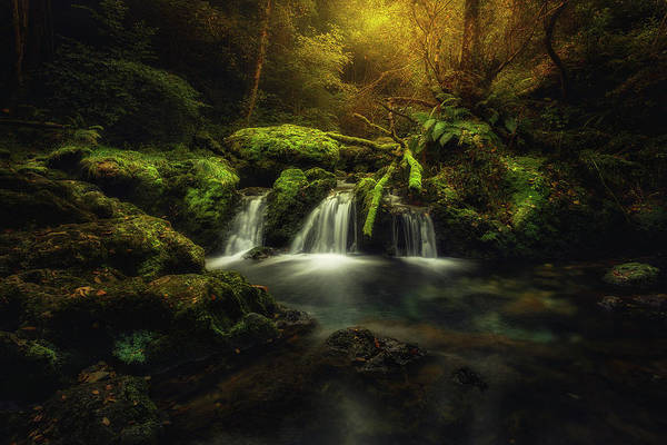Moss Green Photograph - Obya by Glendor Diaz Suarez