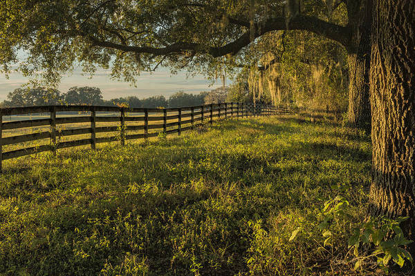 Photograph - Ocala Fence by Dan McGeorge