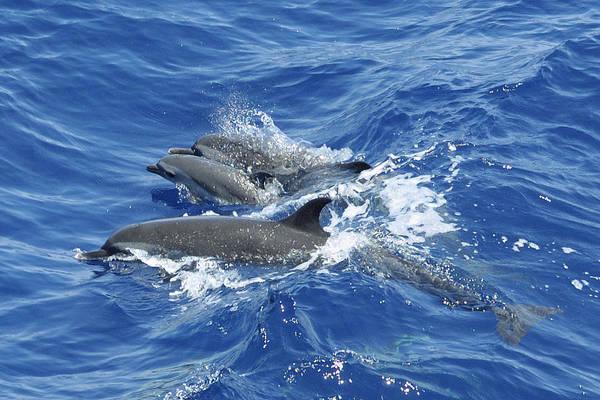 Photograph - Ocean Dolphin Family by Bradford Martin
