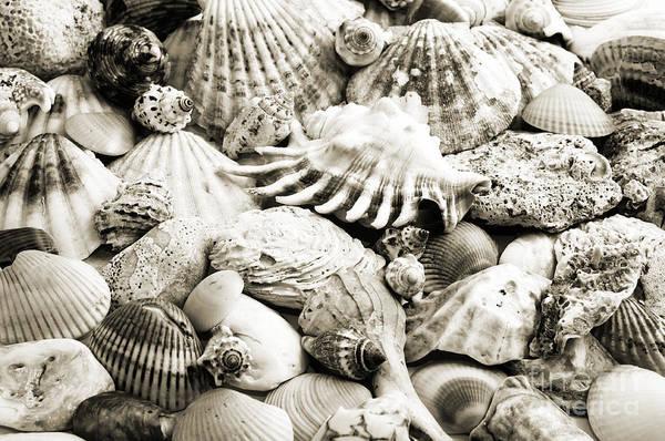 Photograph - Ocean Seashells 1 B W by Andee Design