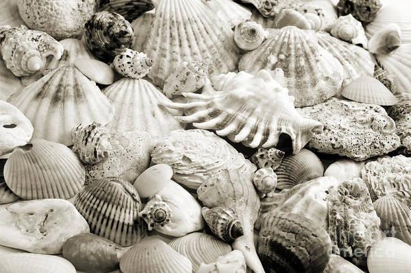 Photograph - Ocean Seashells 2 B W by Andee Design
