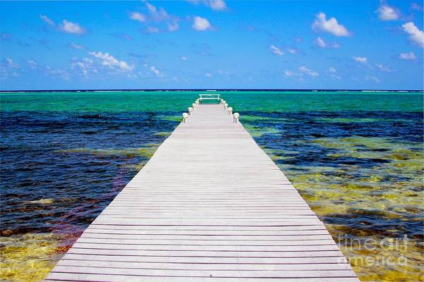 Manatee Photograph - Ocean Walkway by Carey Chen