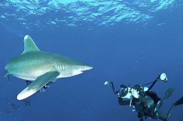 Wall Art - Photograph - Oceanic Whitetip Shark With Underwater by Morten Beier