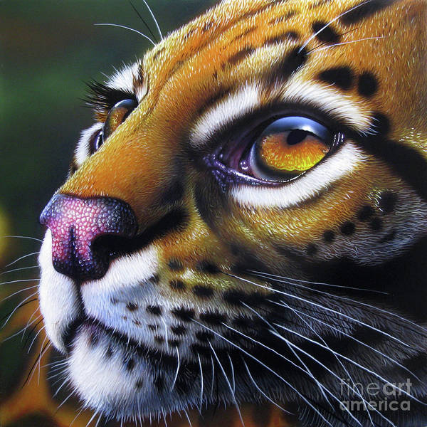 Wall Art - Painting - Ocelot 2 by Jurek Zamoyski