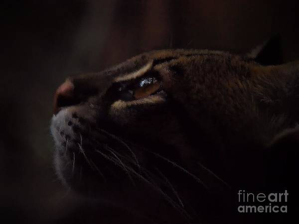 Wall Art - Photograph - Ocelot by Frank Piercy