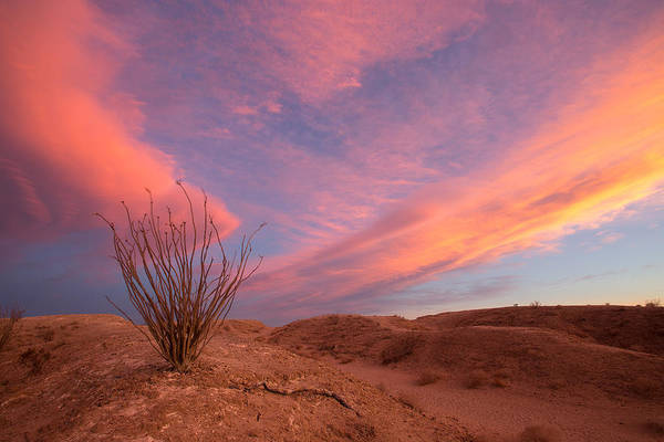 Desert Plant Photograph - Ocotillo Skies by Peter Tellone