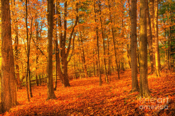 Photograph - October Autumn Forest by Jim Lepard