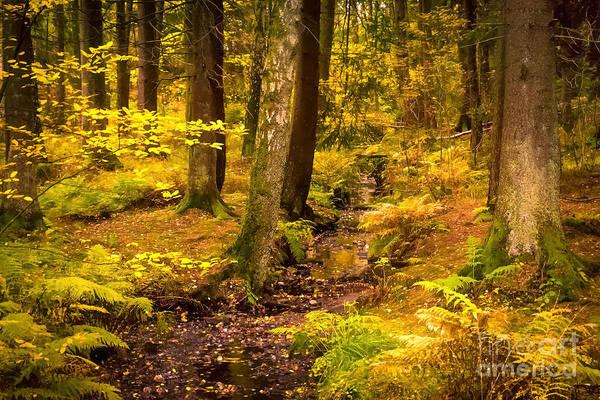 Photograph - October Forest by Lutz Baar