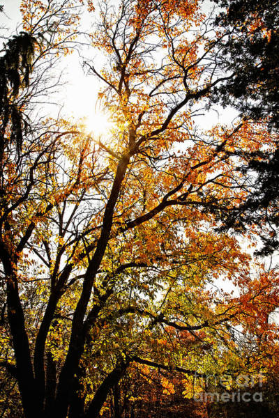Photograph - October Forest Meditation by Lincoln Rogers