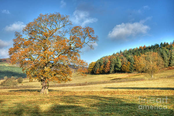 Photograph - October Gold by David Birchall