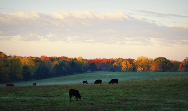 Photograph - October Morning by Cricket Hackmann