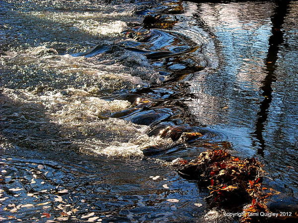Monocacy Wall Art - Photograph - October Shimmers by Tami Quigley