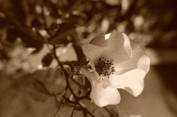 Photograph - October Sunshine by Miguel Winterpacht
