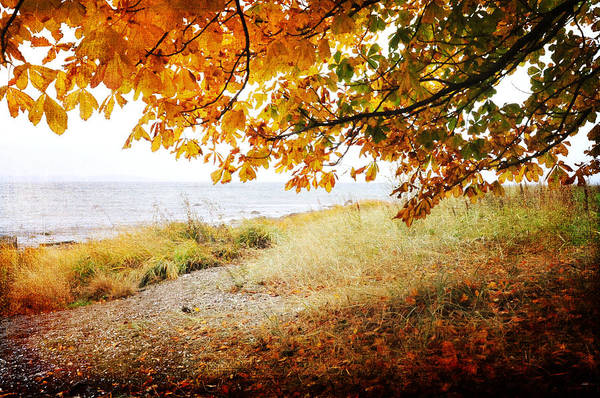 Photograph - October View by Randi Grace Nilsberg