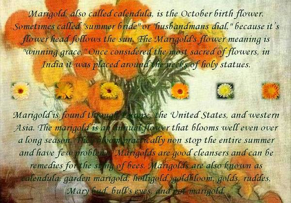 Dial Painting - October's Child Birthday Card With Text And Marigolds by Taiche Acrylic Art