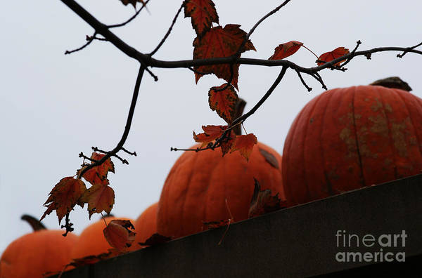 Photograph - October's Garden Wall by Linda Shafer