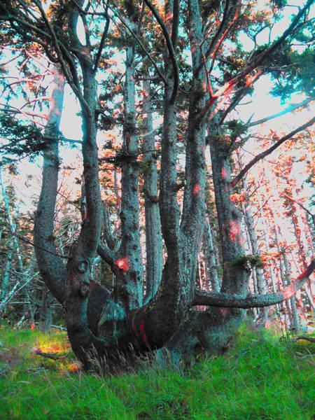 Oregon Coast Digital Art - Octopus Tree  by James Barnes