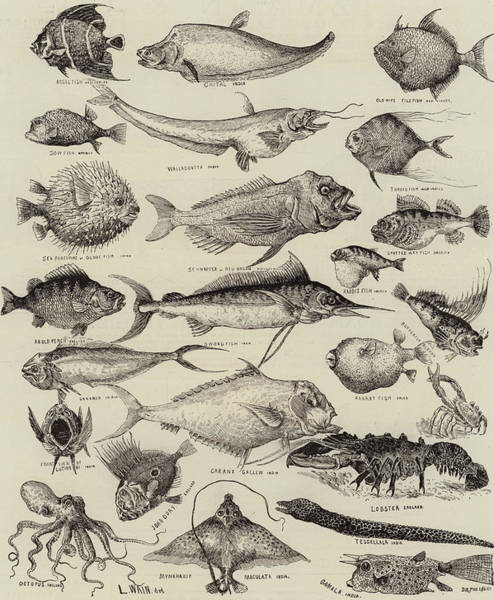 Wall Art - Drawing - Odd Fish At The International Fisheries Exhibition by Louis Wain