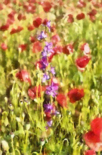 Wild Poppies Digital Art - Odd One Out by Roy Pedersen