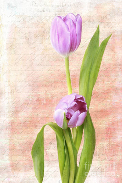 Photograph - Ode To Spring by Beve Brown-Clark Photography