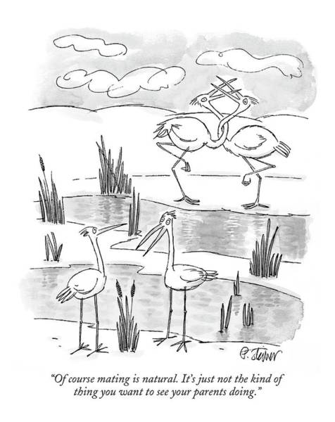 Flamingo Drawing - Of Course Mating Is Natural. It's by Peter Steiner