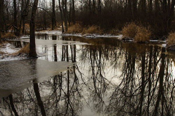 Photograph - Of Trees And Mirrors - Prince Edward County Forest by Georgia Mizuleva