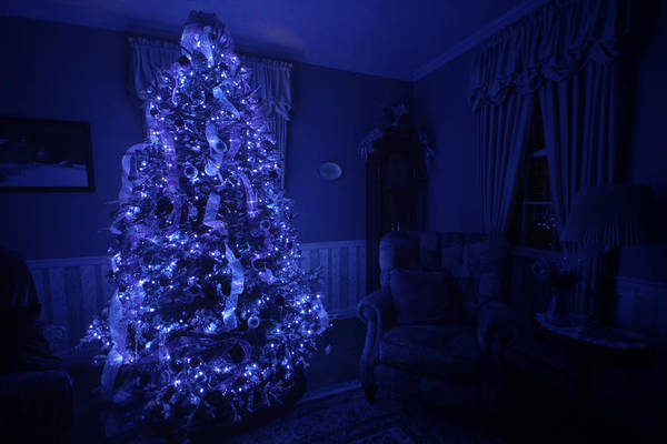 Photograph - Oh Christmas Tree by Shelley Neff