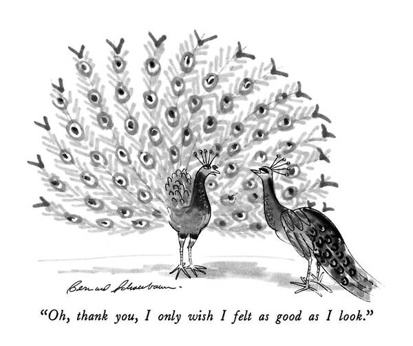 Peacock Drawing - Oh, Thank You, I Only Wish I Felt As Good by Bernard Schoenbaum