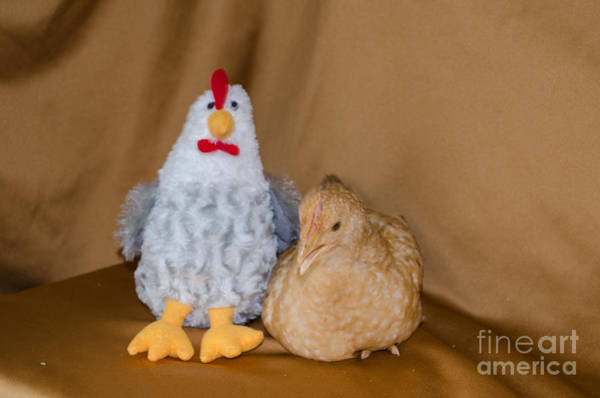 Chicken Feet Photograph - Oh What Big Feet You Have by Donna Brown