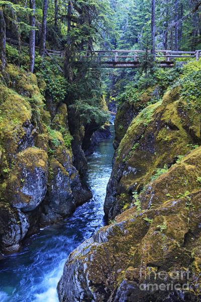 Wall Art - Photograph - Ohanapecosh River by Mark Kiver