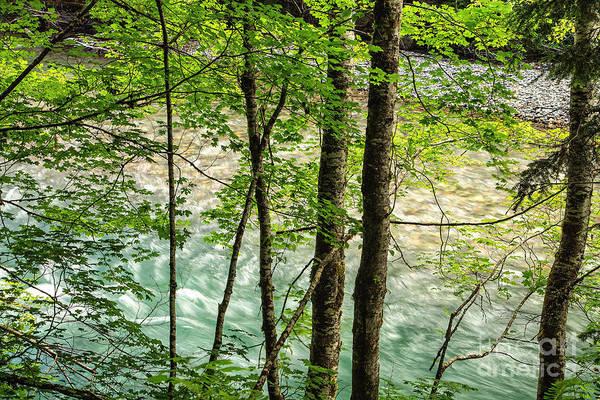 Photograph - Ohanapecosh River by Stuart Gordon