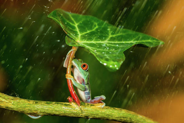 Frog Photograph - Ohh Noo :( It's Raining by Kutub Uddin