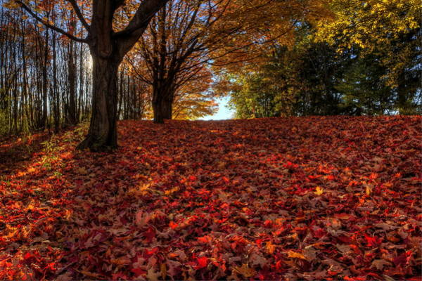 Photograph - Ohio Fall Scenery by David Dufresne