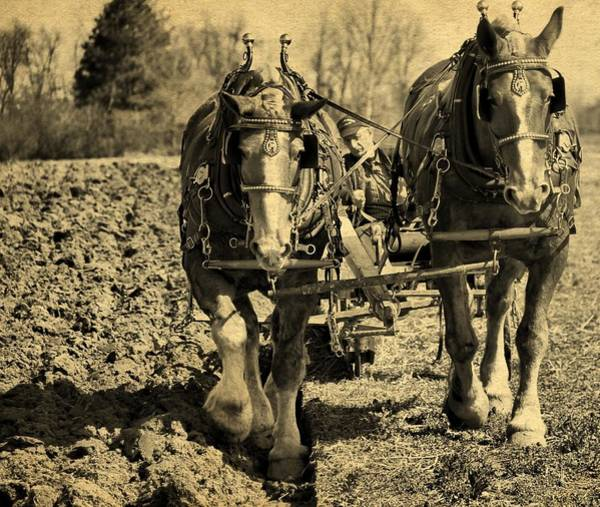 Plow Horses Photograph - Ohio Farm Horses by Dan Sproul