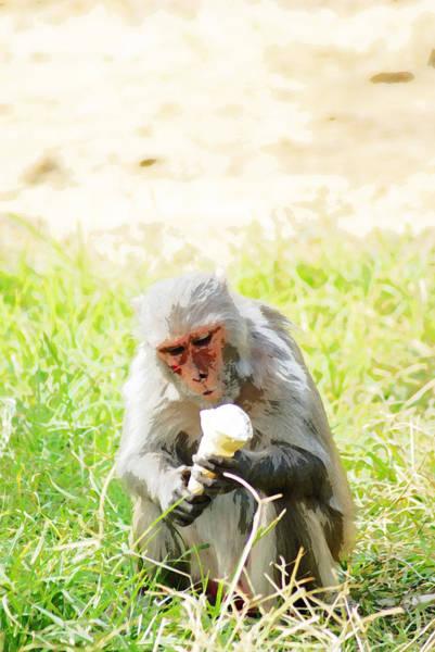 Ice Cream Cones Digital Art - Oil Painting - A Monkey Eating An Ice Cream by Ashish Agarwal