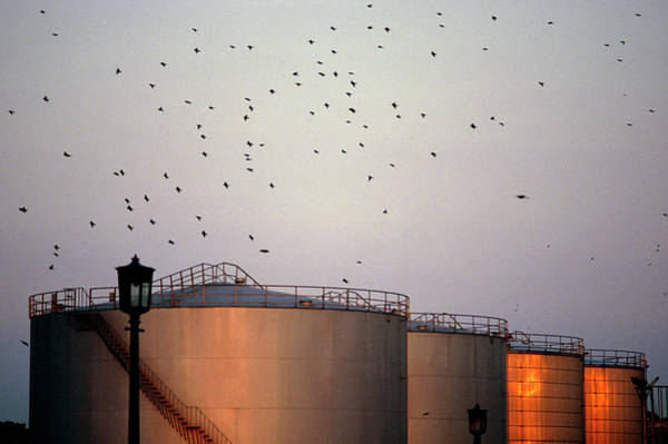 Fossil Fuel Photograph - Oil Storage Tanks by Martin Dohrn/science Photo Library