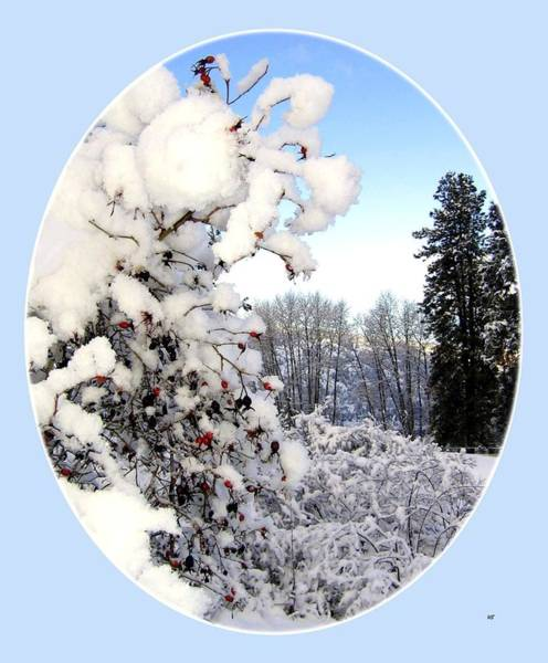Okanagan Photograph - Okanagan Valley Snowscape by Will Borden